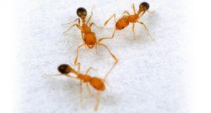 شركة مكافحة النمل الابيض ببريدة