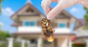 أفضل شركة مكافحة حشرات وقوارض بالبكيرية 0537979574