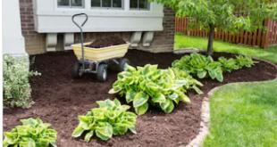 نظافة وتنسيق حدائق ببريده